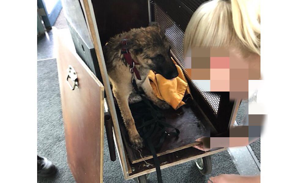 Verletzter Hund nach Verkehrsunfall