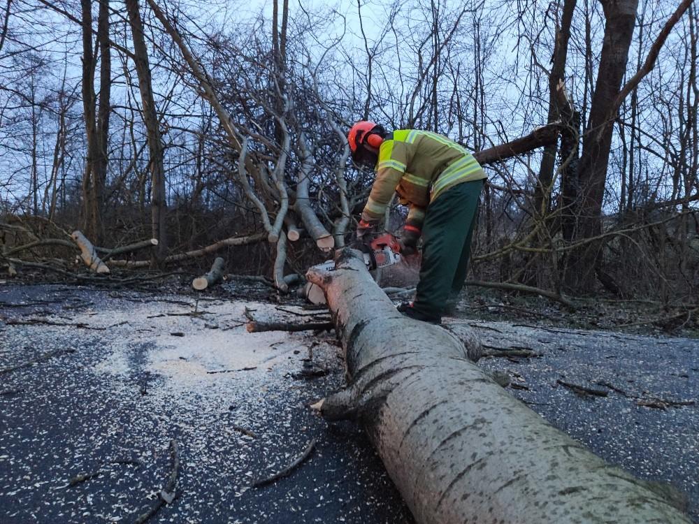 Baum droht umzustürzen