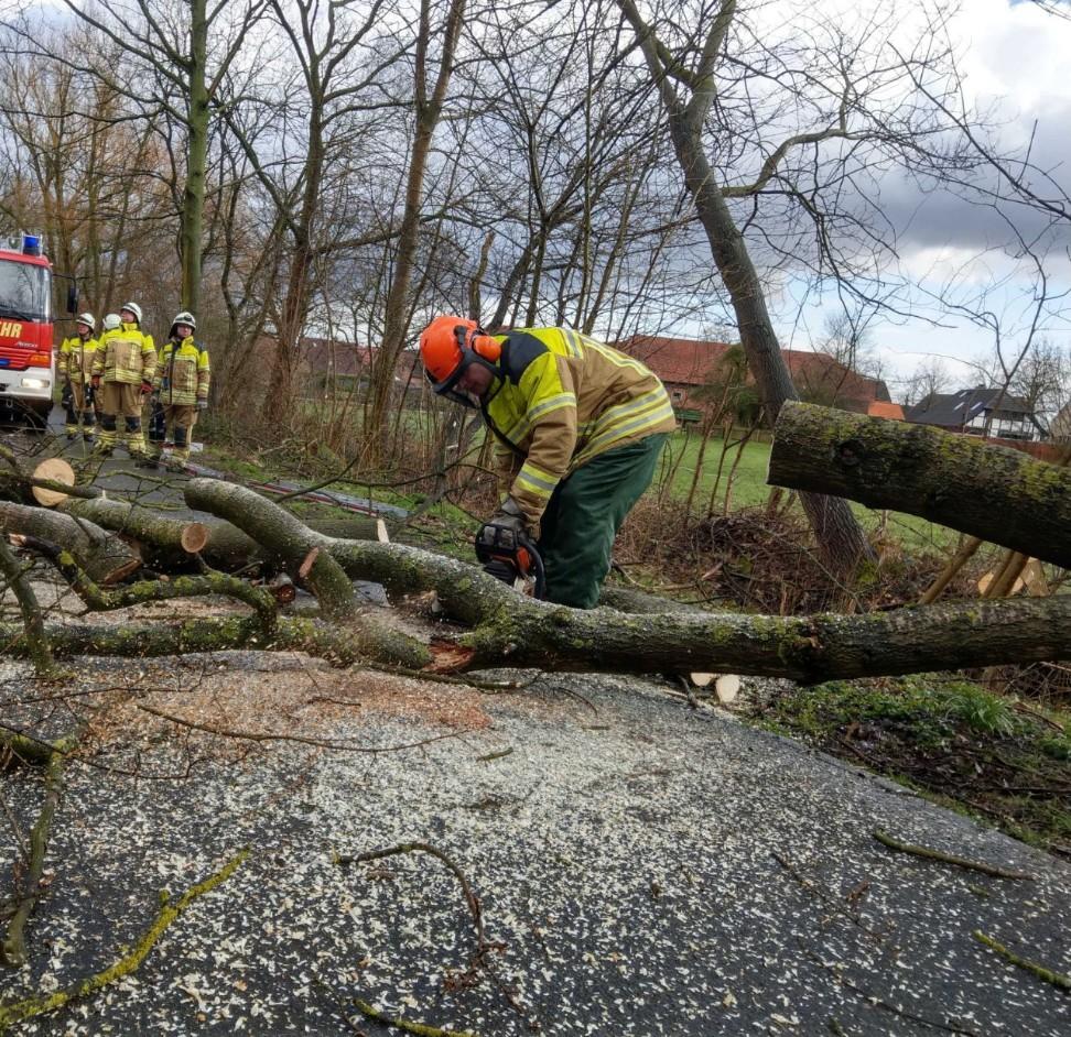Bäume drohen umzustürzen